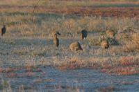 Namibie2004-01